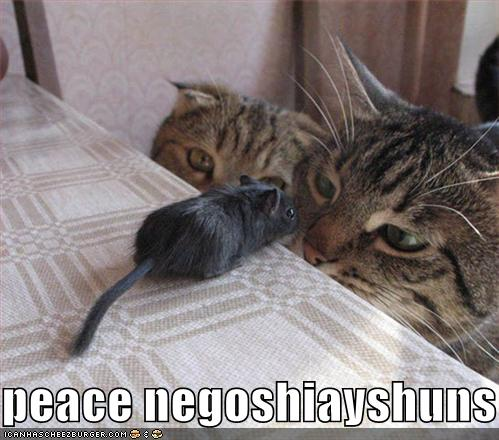 lolcatsfunny-pictures-cats-mouse.jpg